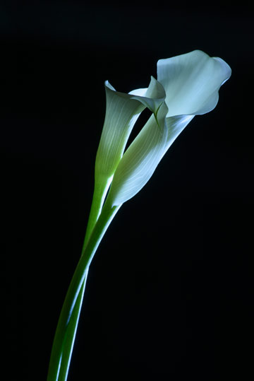 Humanist Funerals and Memorials